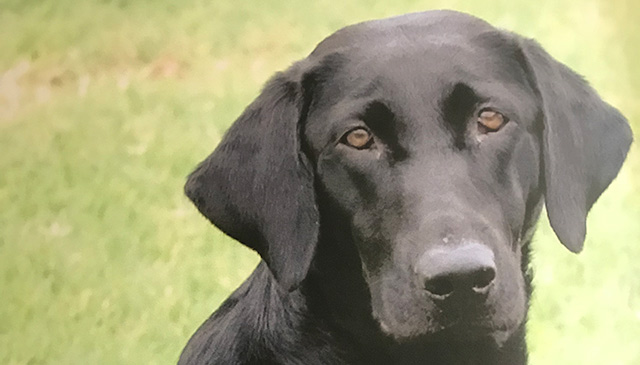 Wallaces make special gift in memory of beloved Labrador