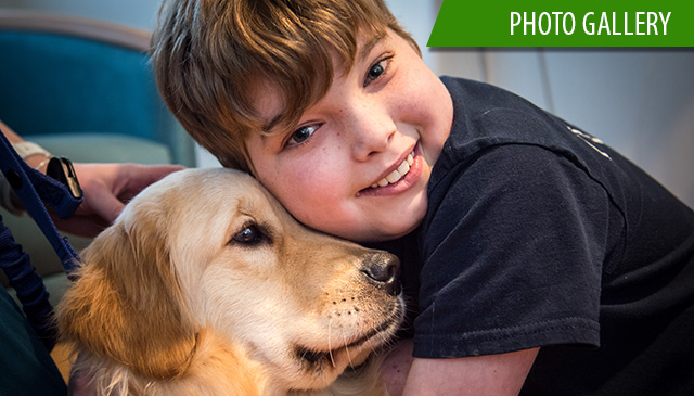 Bailey has arrived, Texas Children's newest therapy dog starts work