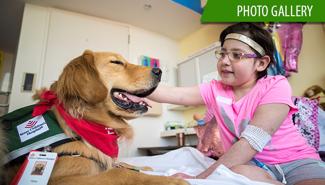 Texas Children's welcomes third therapy dog